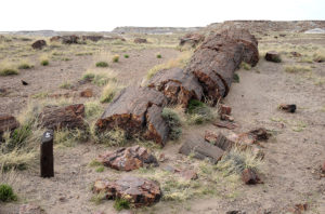 Petrified Forrest2